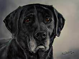 Age Cannot Wither Her - an oil painting of a black labrador retriever
