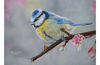 Blue Tit With Blossom - an oil painting of a Blue Tit sitting on a branch with pink blossom