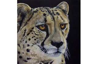 Watchful  - an original oil painting of a cheetah